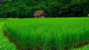 Preview wallpaper grass, lawn, beautiful, summer