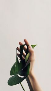 Preview wallpaper hand, leaf, minimalism, plant, drops