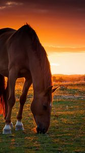 Preview Wallpaper Horse Field Pasture Sunset