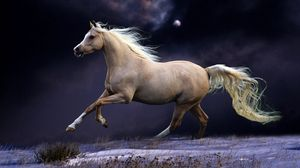 Horse Full Hd Hdtv Fhd 1080p Wallpapers Hd Desktop Backgrounds