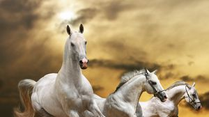 Preview wallpaper horse, race, freedom, grass, dust, sky