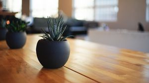 Preview wallpaper houseplant, pot, table