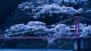 Preview wallpaper japan, bridge, sakura, night