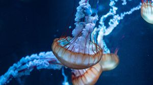 Preview wallpaper jellyfish, tentacles, underwater world, sea