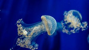 Preview wallpaper jellyfish, underwater, sea