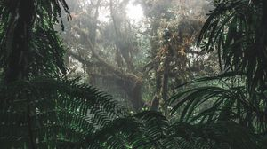 Preview wallpaper jungle, forest, fog, trees, bushes, tropics