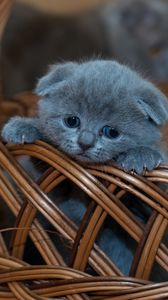 Preview wallpaper kitten, british shorthair, cute, sad, basket