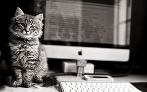Preview wallpaper kitten, cat, computer, keyboard, apple, mac, black and white