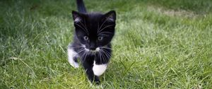 Preview wallpaper kitten, cat, grass, walk, cute