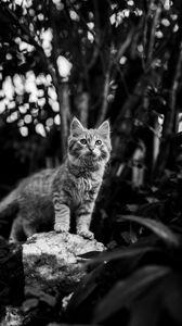 Preview wallpaper kitten, cat, pet, animal, bw
