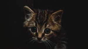 Preview wallpaper kitten, cute, small, brown, pet