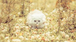Preview wallpaper kitten, fluffy, grass, flowers, run
