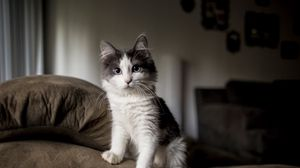 Preview wallpaper kitten, furry, spotted, sofa