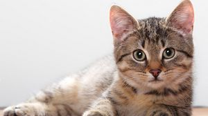 Kitten Wallpapers Hd Desktop Backgrounds Images And Pictures