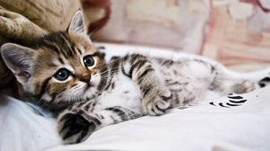 ... Preview wallpaper kitten, lying, striped, small, cute