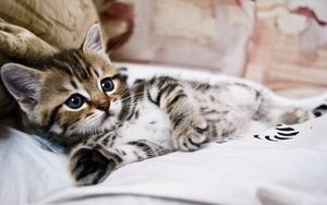 Preview wallpaper kitten, lying, striped, small, cute