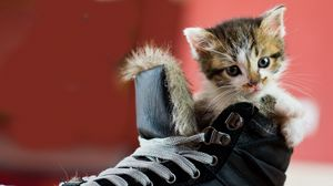 Preview wallpaper kitten, shoes, spotted