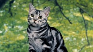 Preview wallpaper kitten, tabby, sit