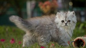 Preview wallpaper kitten, walk, fluffy