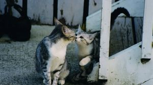 Preview wallpaper kittens, caring, tenderness, attention