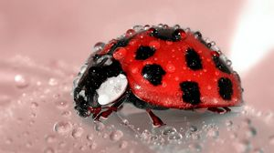 Preview wallpaper ladybug, drop, surface