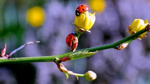 Preview wallpaper ladybugs, buds, branch, spring