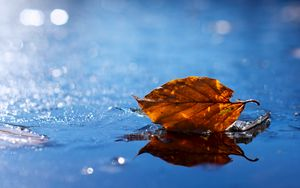Preview wallpaper leaf, autumn, fallen, dry, water, liquid