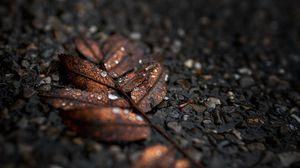 Preview wallpaper leaf, drops, macro, wet, brown