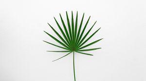 Preview wallpaper leaf, plant, minimalism, green, white