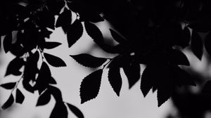 Preview wallpaper bw, leaves, branches, outlines