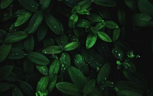 Preview wallpaper leaves, drops, dew, plant, moisture, dark