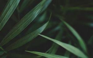 Preview wallpaper leaves, macro, plant, palm, green