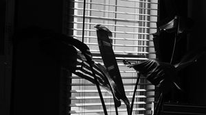 Preview wallpaper leaves, plant, blinds, bw, aesthetic