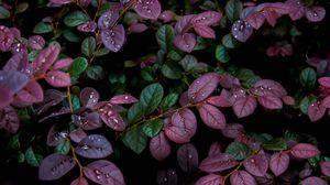 Preview wallpaper leaves, plant, drops, dew, moisture
