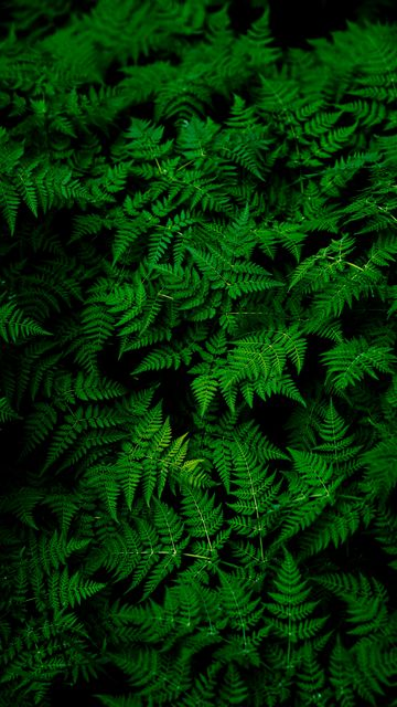 360x640 Wallpaper leaves, plant, green