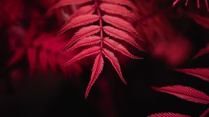 Preview wallpaper leaves, red, macro