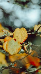 Preview wallpaper leaves, yellow, macro, branch, autumn