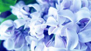 Preview wallpaper lilac, flowers, plants