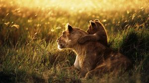 Preview wallpaper lion, lion cub, family, cub, caring, baby, sunshine