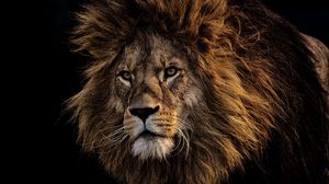 Preview wallpaper lion, mane, predator, king of beasts, muzzle