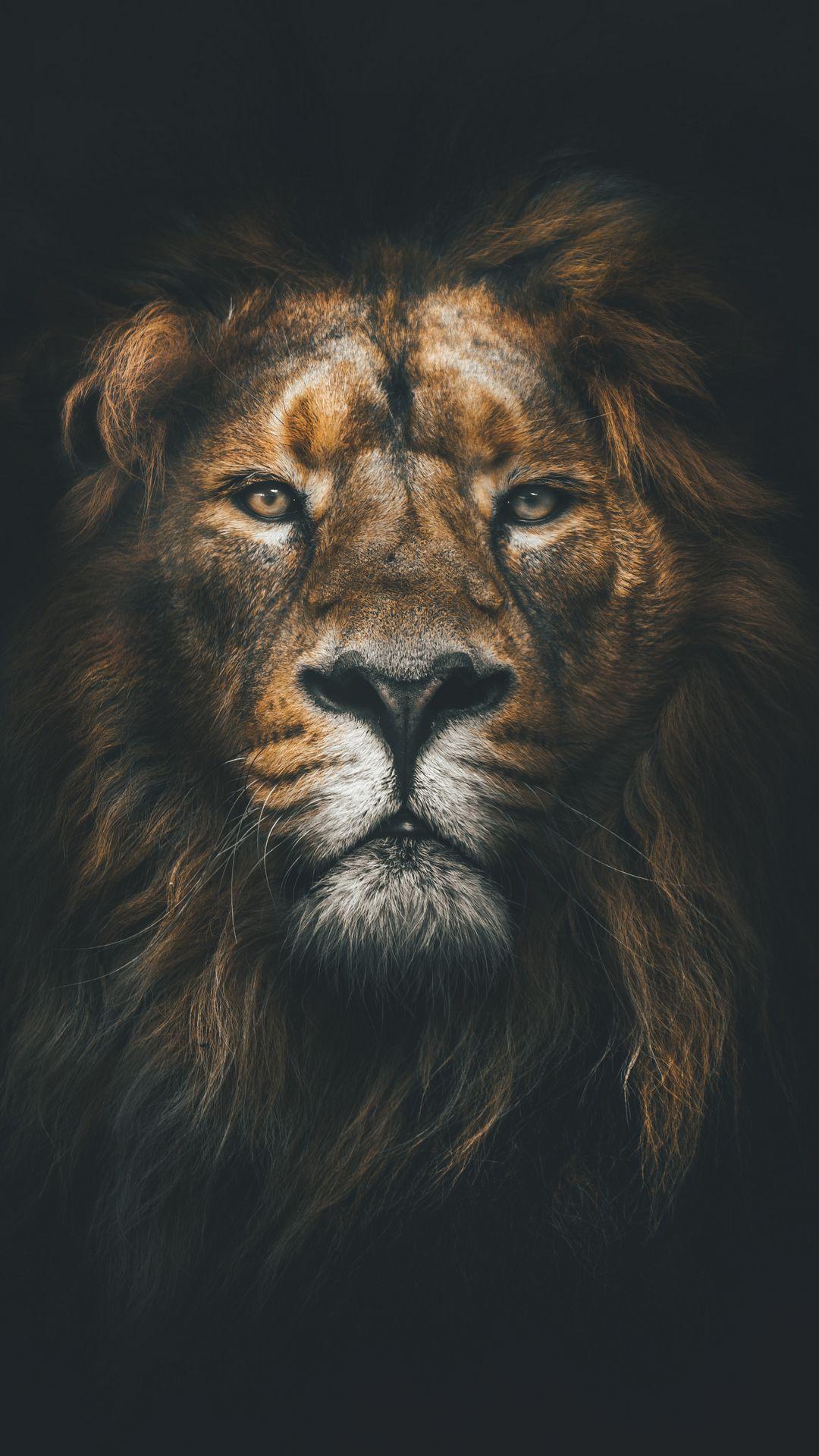 1080x1920 Wallpaper lion, muzzle, mane, loок, predator