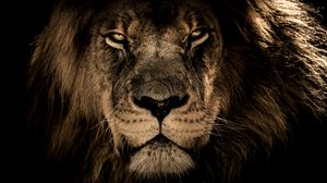 Preview wallpaper lion, muzzle, mane, predator, look