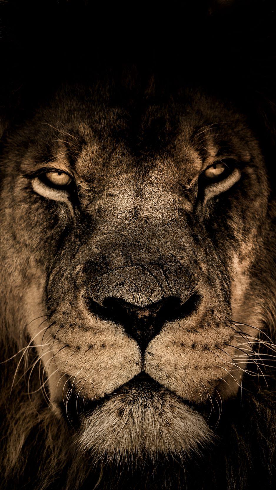 938x1668 Wallpaper lion, muzzle, mane, predator, look