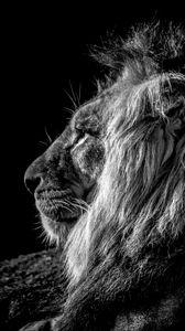 Preview wallpaper lion, profile, bw