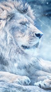 Preview wallpaper lion, snow, big cat, king of beasts