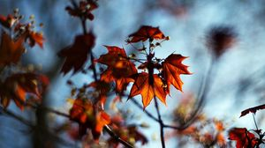 Preview wallpaper macro, autumn, maple, bokeh, nature, leaves, branches
