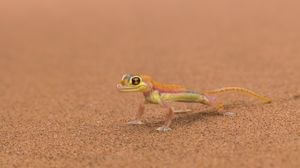 Preview wallpaper mars, lizard, background