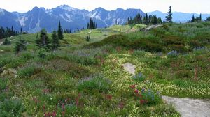 Preview wallpaper meadow, alpes, mountains, flowers, vegetation, multi-colored