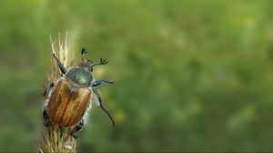 Preview wallpaper minimalism, grass, summer, beetle, green