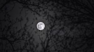 Preview wallpaper moon, branches, silhouettes, night, black and white, black